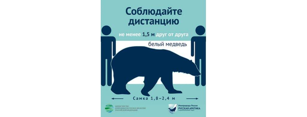 En Russie dans les parcs arctiques, 2 m = la taille d'un ours blanc