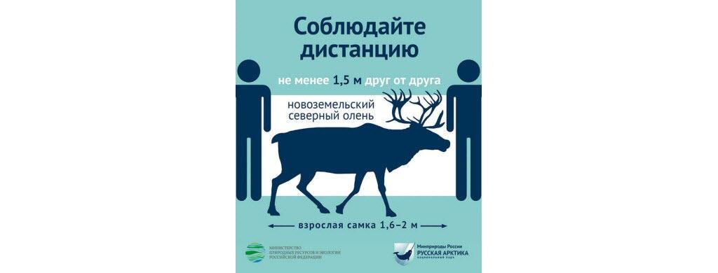 En Russie dans les parcs arctiques, 2 m = la taille d'un renne