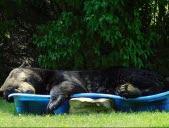 Une sieste dans la piscine